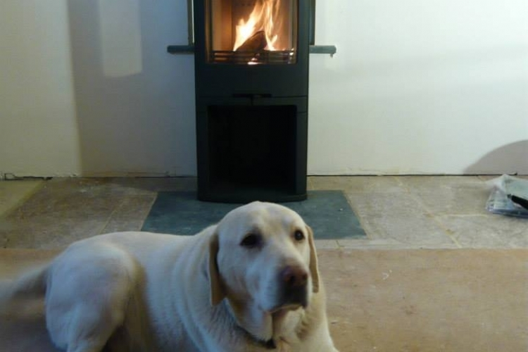Contura 810 with dog